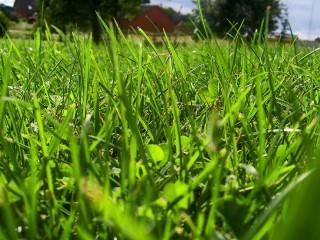 Prestige Lawn Care  NO Franchise!