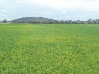 650 acres , lucerne , Grazing  , Cropping , it's all here !